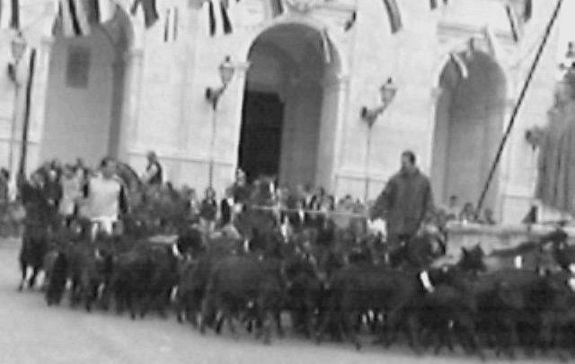Meca: benção do gado